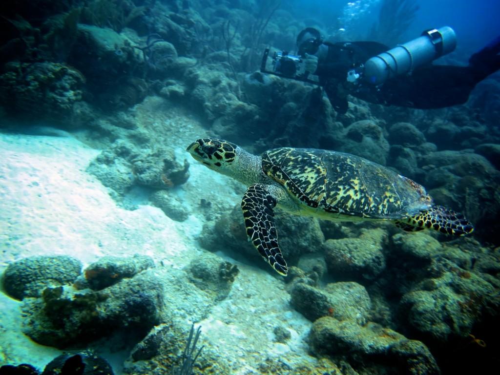 diving Barbados