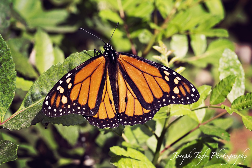 web_joseph-tufo-photography-butterfly-surrey-holidays.5