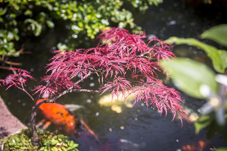 joe-bonzi tree-15