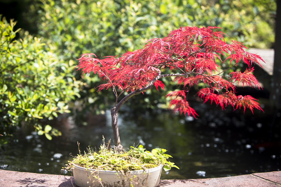 joe-bonzi tree-18