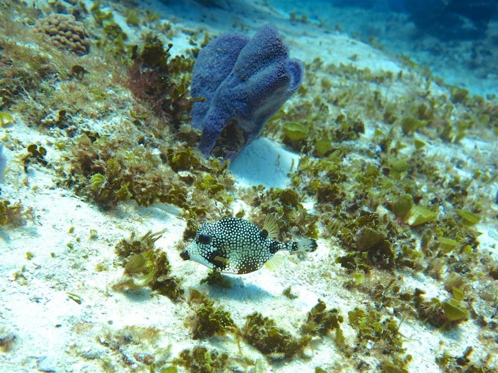 Underwater Picture in Cozumel